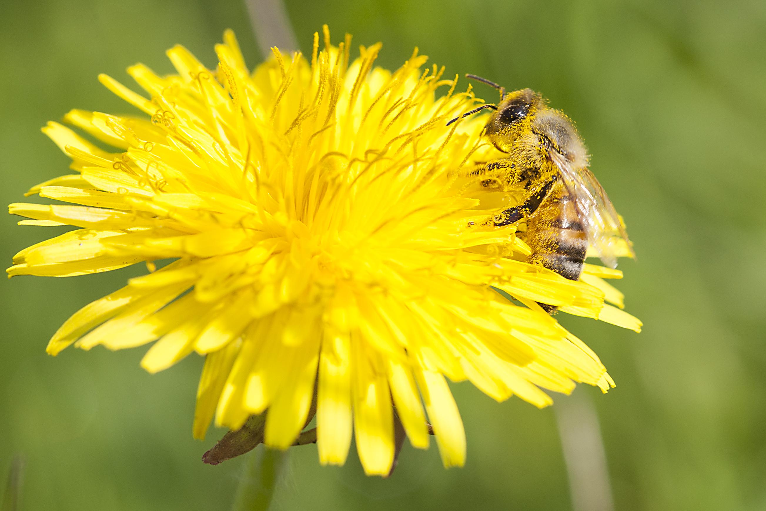 spallanzani apicultura 3